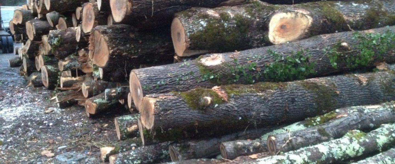 Logs-1024x768-1440x600